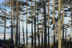 Rough ocean and beach seen through tall trees.