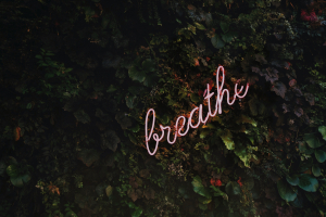 """A lush, living wall of greenery with neon sign that says """"breathe"""" in script with a pale pink written at a 45 degree angle"""